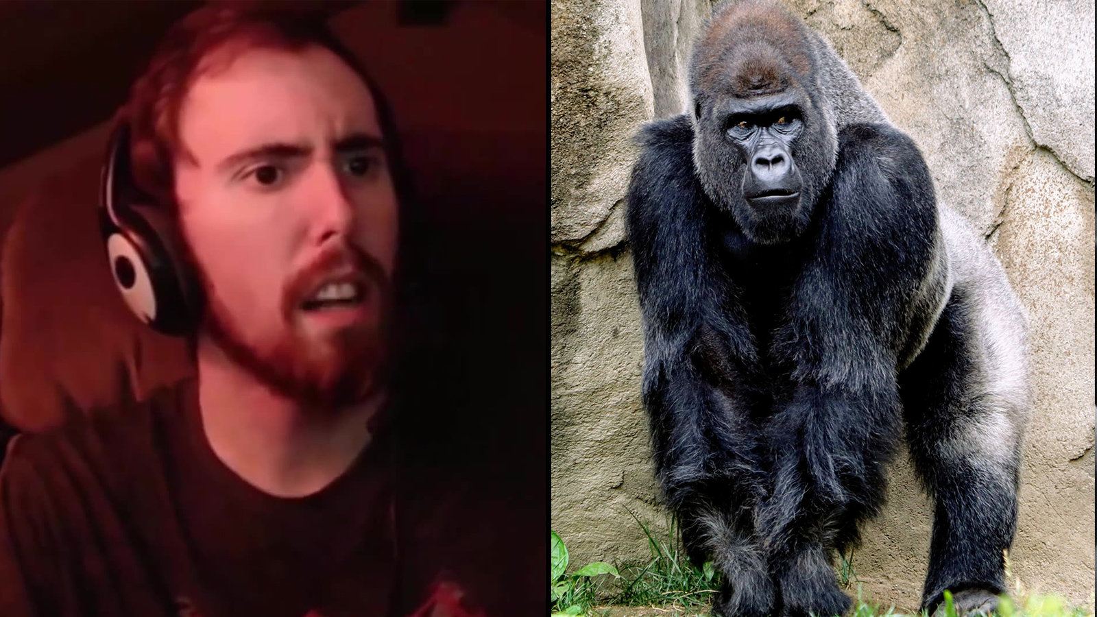 Asmongold streaming on Twitch alongisde a picture of a gorilla.