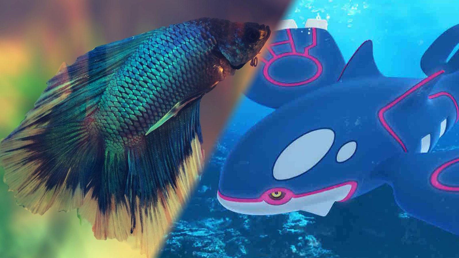 fish playing pokemon
