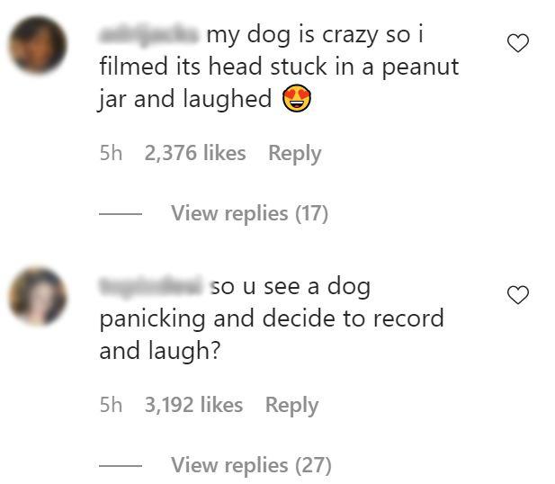 Lauren Kettering dog comments